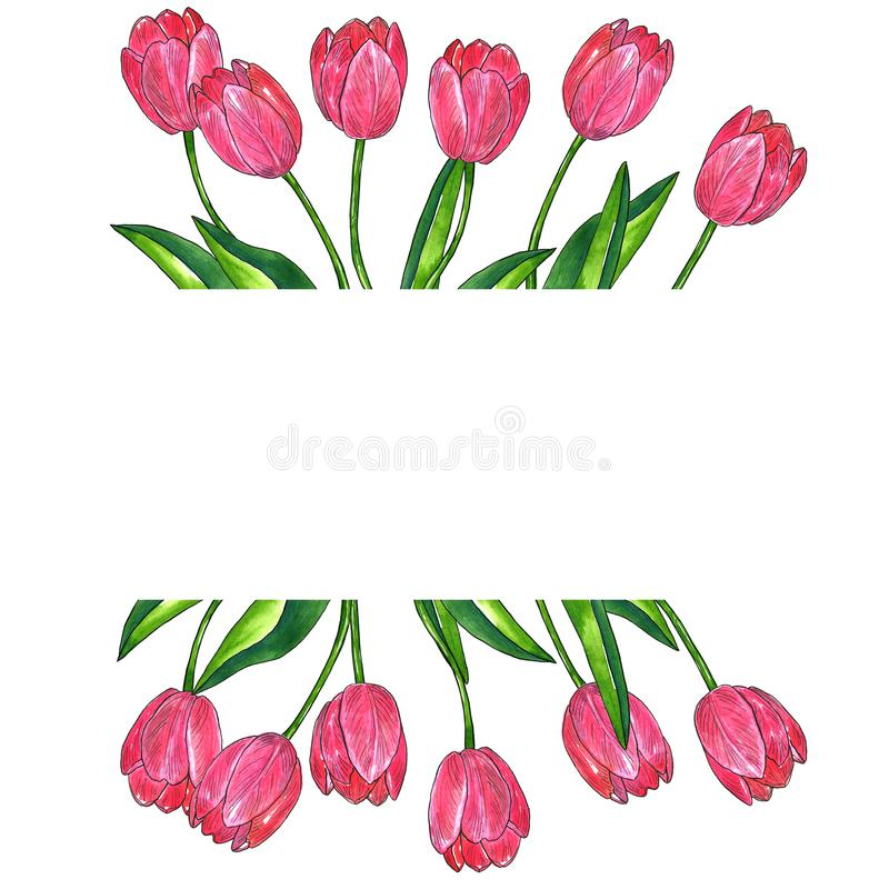 Plantilla rectangular para el diseño Tulipanes rosados rojos con las hojas Ejemplo dibujado mano de la acuarela y de la tinta Ais libre illustration