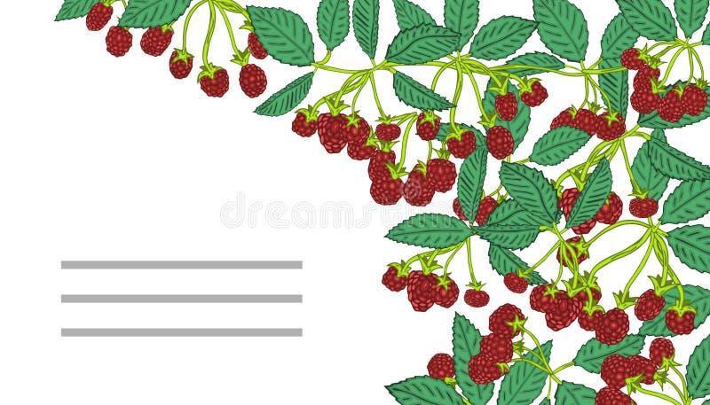 Plantillas del verano con las bayas Plantilla para su diseño, tarjetas de felicitación, avisos festivos stock de ilustración