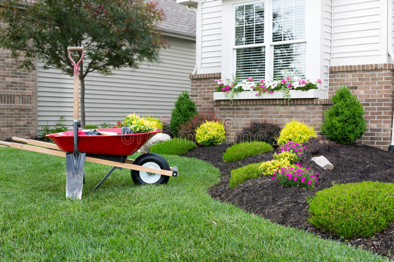 Planting a celosia flower garden around a house. Wheelbarrow standing on a neat manicured green lawn alongside a flowerbed while planting a celosia flower garden stock photo