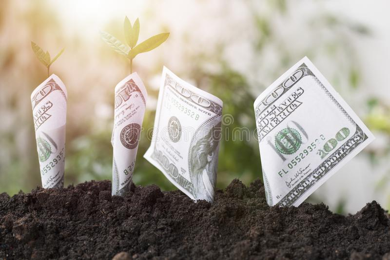 Planting dollar and tree growing up on soil, concept as save earth and world environment day stock images