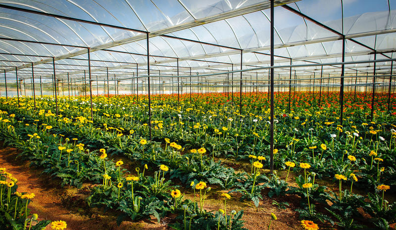 Planting flowers in the greenhouse royalty free stock photography