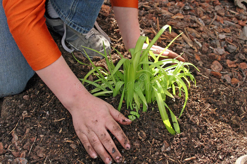 Planting for the future royalty free stock photo