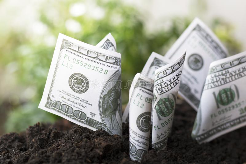 Planting money dollar in the soi, concept as save, finance and capital banking. Growing up stock images