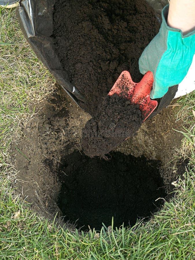 Planting preparation stock photo