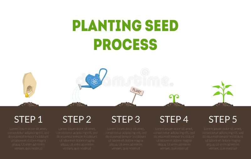Planting Seed Process Banner, Stages of Growth of Plant from Seed, Cycle of Growth of Garden Plant Vector Illustration. Web Design stock illustration