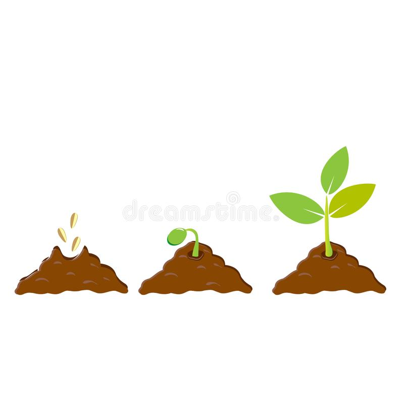 Planting seed sprout in ground. Infographic sequence grow sapling. Seedling gardening tree. Icon, flat isolated on white backgroun. D. Vector illustration stock illustration