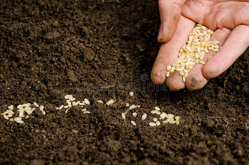 Planting seeds into soil. Closeup of a males hand planting seeds in soil stock photo