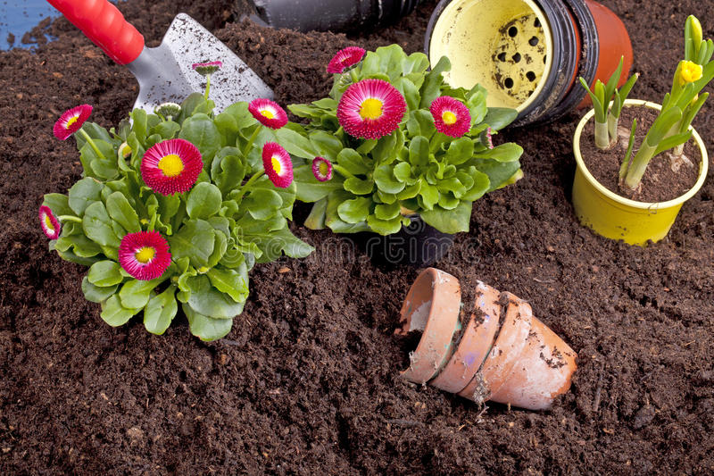 Download Planting spring flowers stock image. Image of potted - 23601615