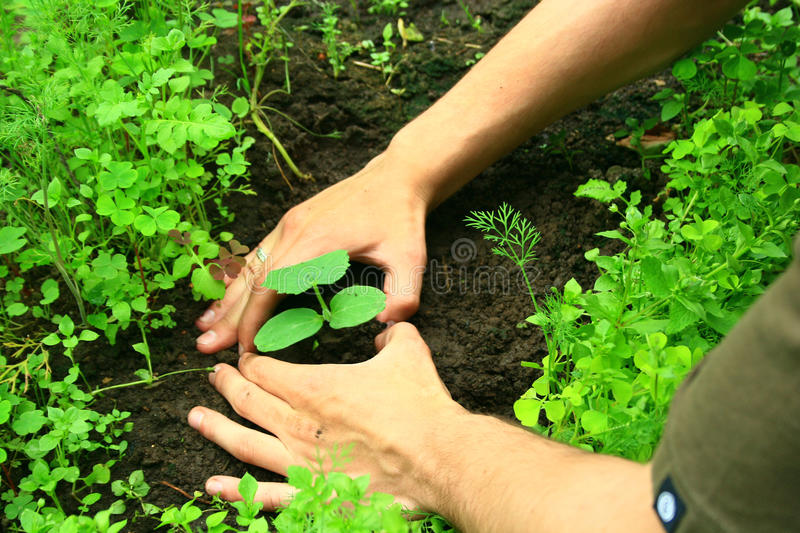 Download Planting a tree 2 stock image. Image of finger, hand - 11068549