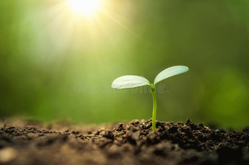 planting tree in garden with sunrise. concept royalty free stock photography