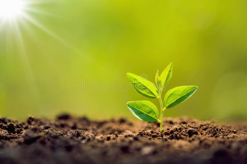 planting tree in garden with sunrise. concept stock photos