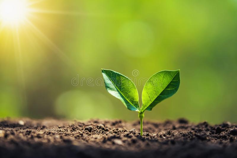 planting tree in garden with sunrise. concept royalty free stock images