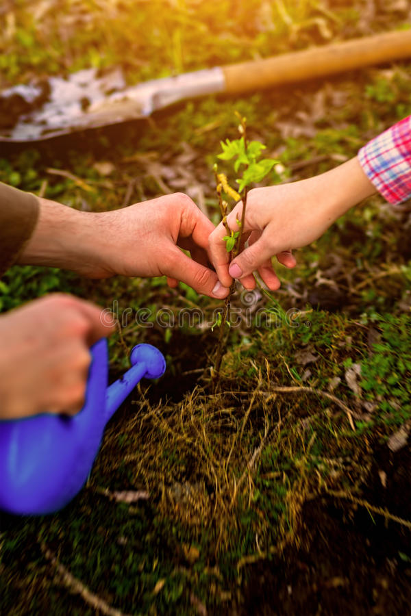 Planting a tree, new life stock images