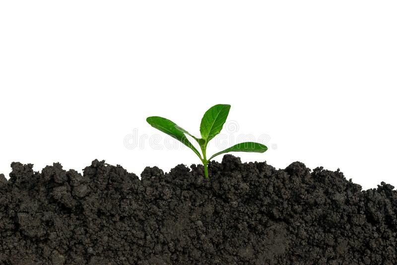 Planting trees in the ground the environment and ecology. royalty free stock images