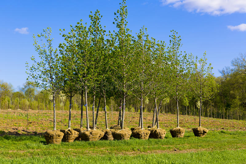 Planting trees stock photography