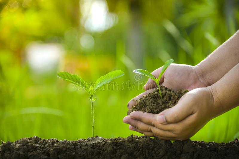 Planting trees,  loving the environment and protecting nature Nourishing the plants World Environment Day To help the world look. Planting trees, loving the royalty free stock images