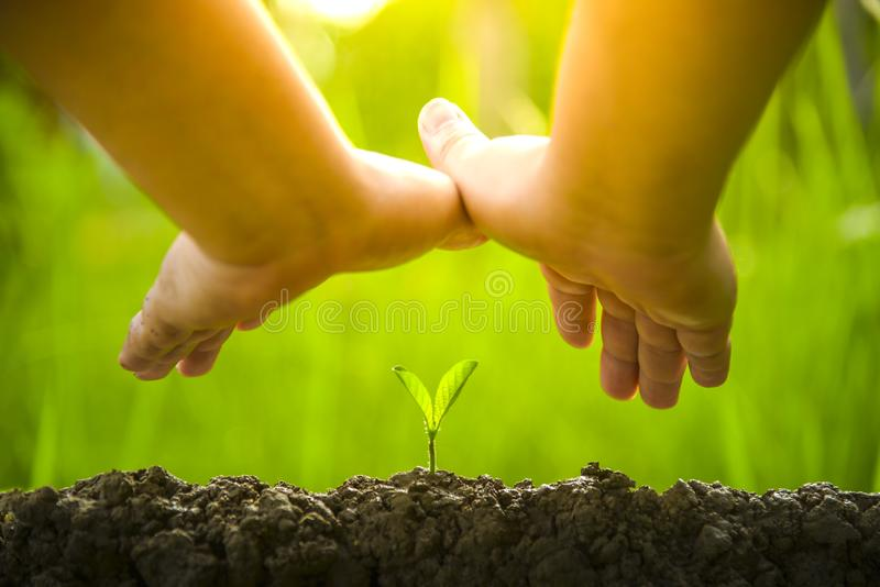 Planting trees, loving the environment and protecting nature Nourishing the plants World Environment Day To help the world look. Planting trees, loving  the stock image
