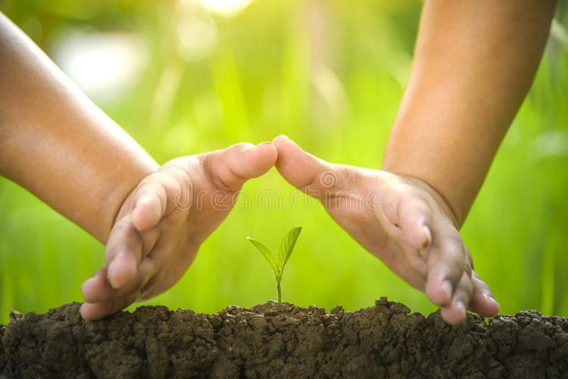 Planting trees, loving  the environment and protecting nature Nourishing the plants World Environment Day To help the world look. Planting trees, loving the royalty free stock image