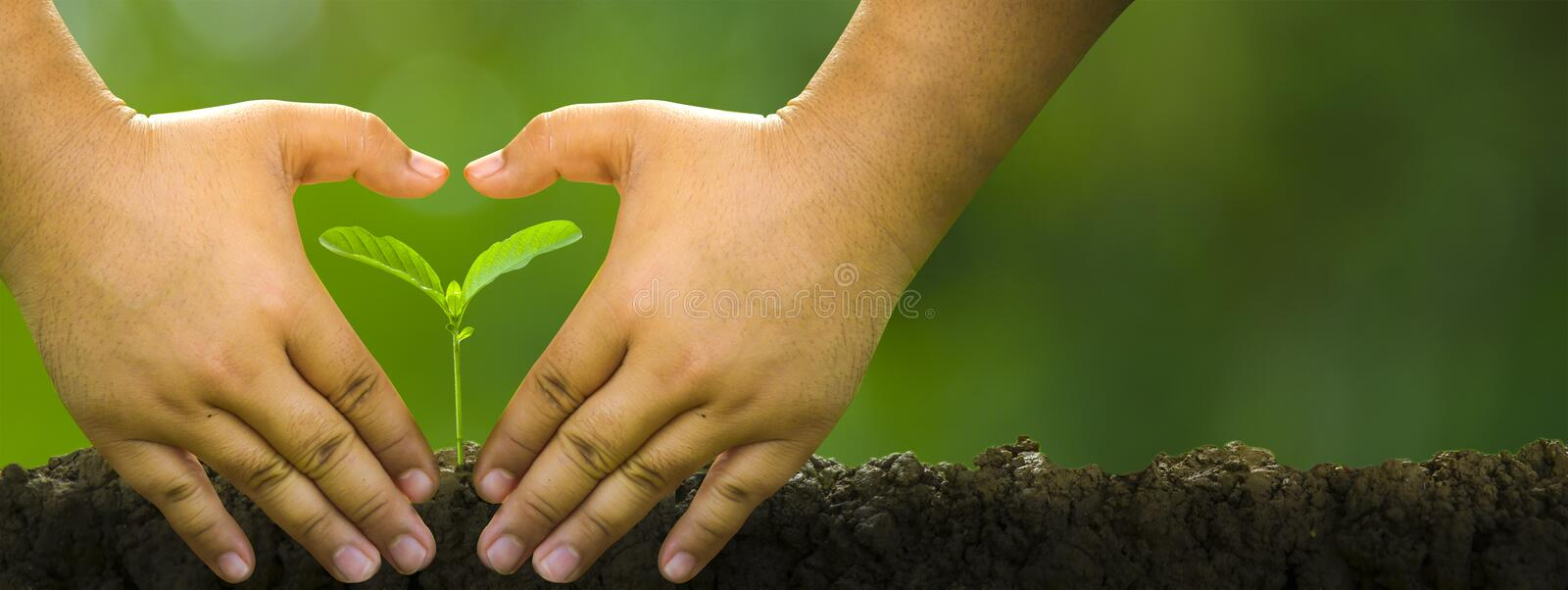 Planting trees, loving the environment and protecting nature Nourishing the plants World Environment Day To help the world look. Planting trees, loving the stock photo