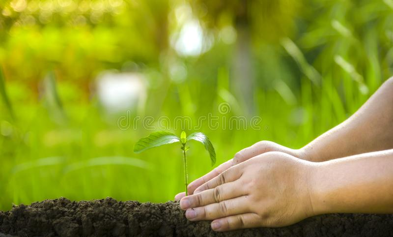 Planting trees, loving the environment and protecting nature Nourishing the plants World Environment Day To help the world look. Planting trees, loving the royalty free stock photos