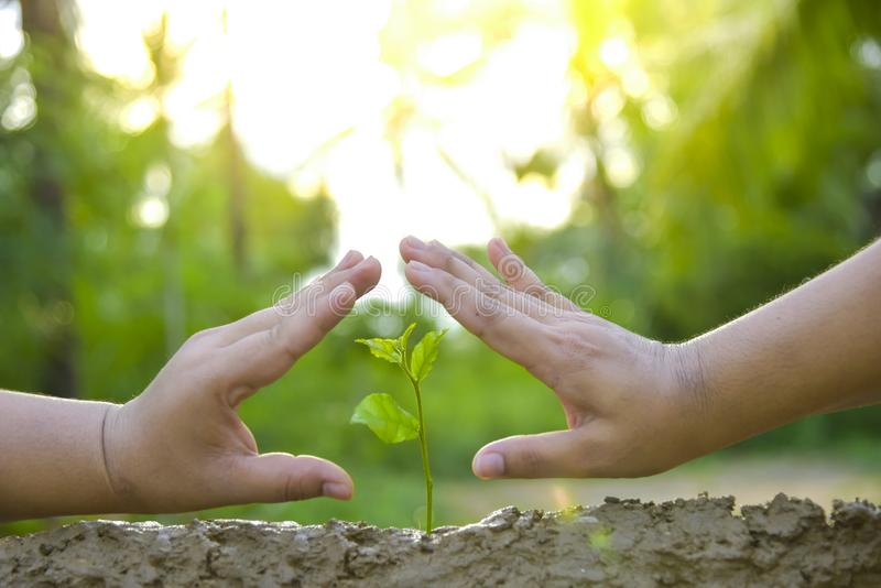 Planting trees, loving the environment and protecting nature Nourishing the plants World Environment Day To help the world look. Planting trees, loving the stock photography