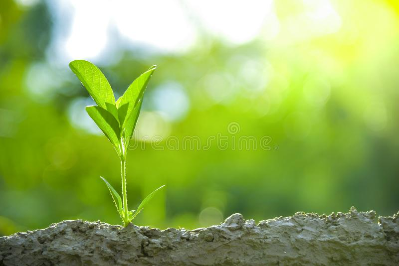Planting trees, loving the environment and protecting nature Nourishing the plants World Environment Day To help the world look. Planting trees, loving the stock images