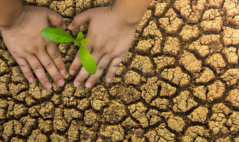 Planting trees, loving the environment and protecting nature Nourishing the plants World Environment Day To help the world look. Beautiful stock image