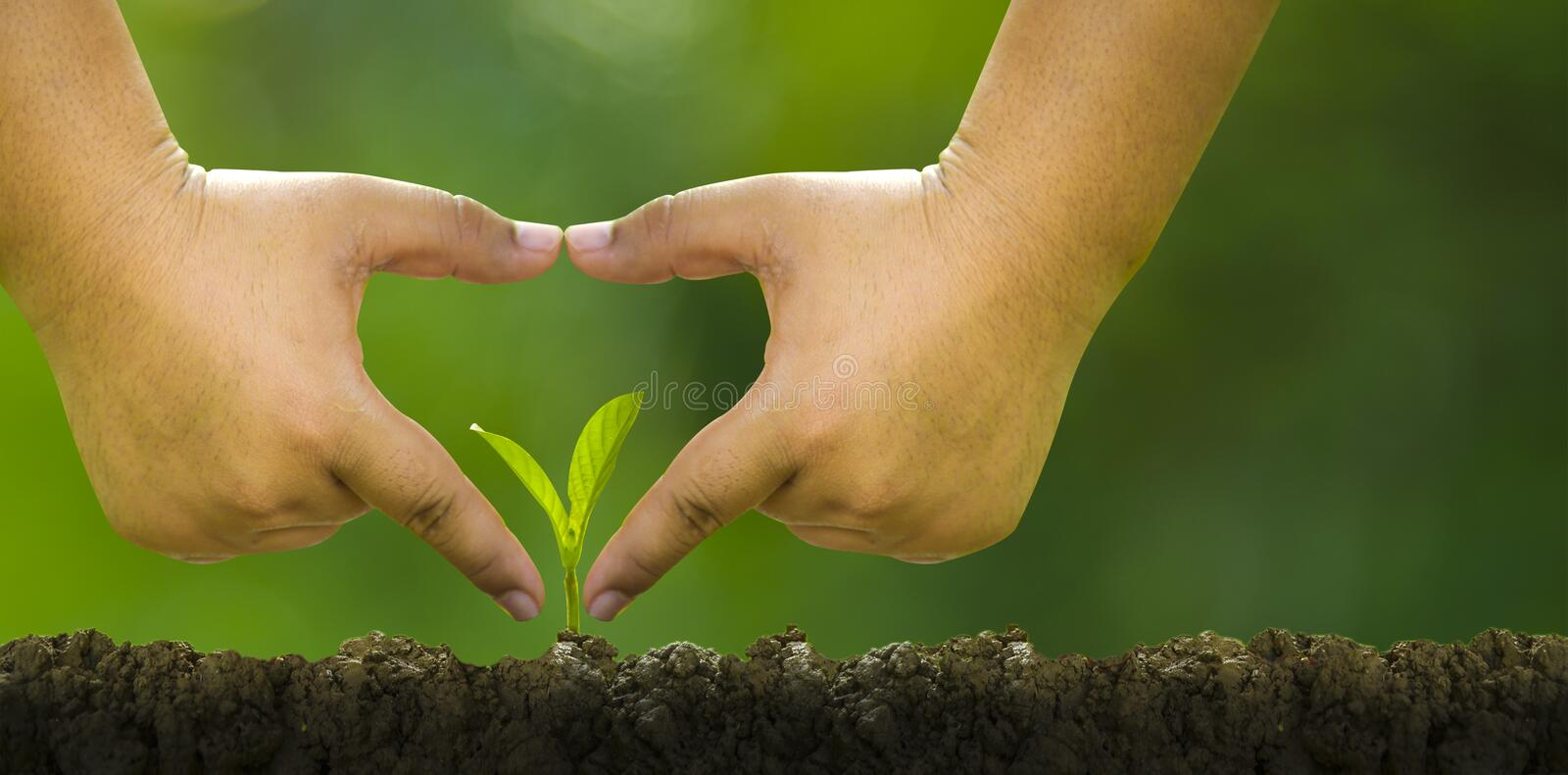 Planting trees, loving the environment and protecting nature Nourishing the plants World Environment Day To help the world look. Planting trees, loving the stock photos