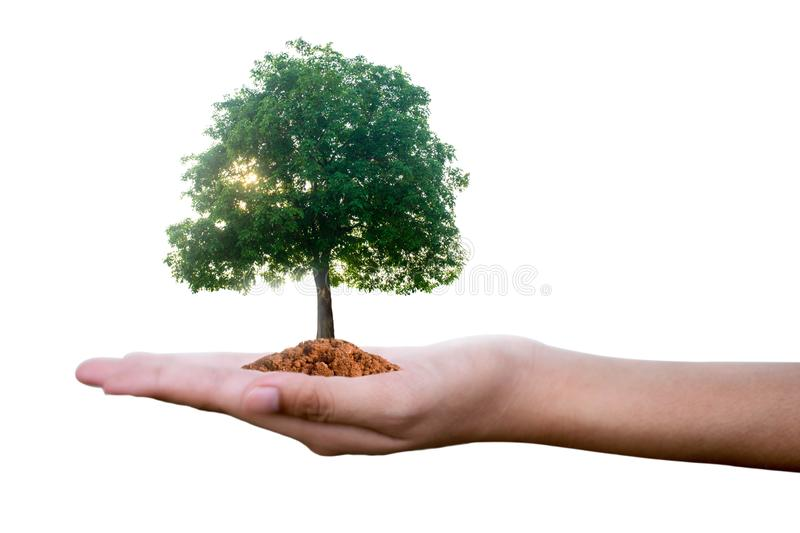 Planting trees on a silver coin in the hands of two hands that are completely separated from the background. royalty free stock photography