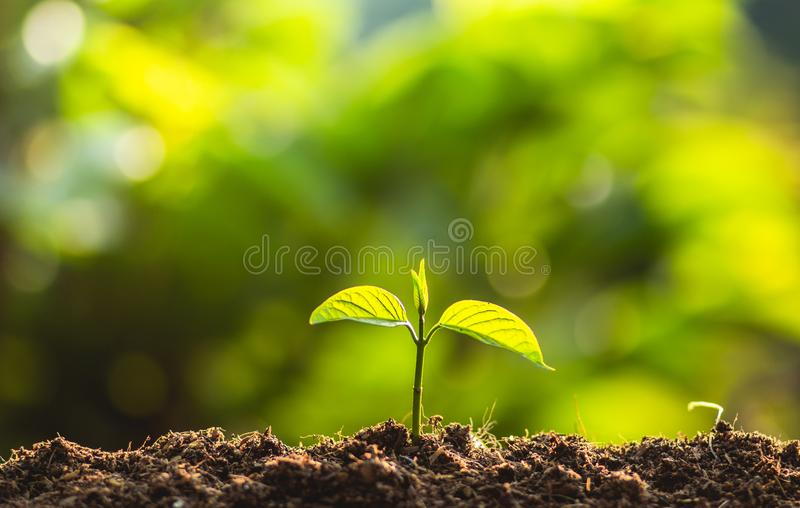 Planting trees Tree Care save world,The hands are protecting the seedlings in nature and the light of the evening royalty free stock images
