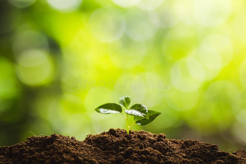 Planting trees Tree growth Seeding Fourth step seed is a tree. royalty free stock images