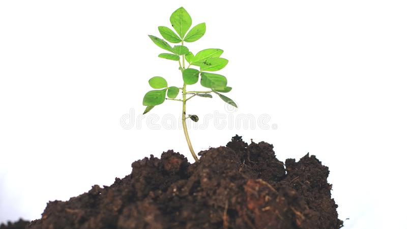 Planting trees on a white background royalty free stock image