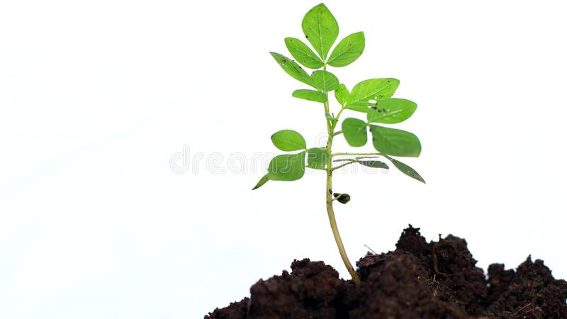 Planting trees on a white background stock image