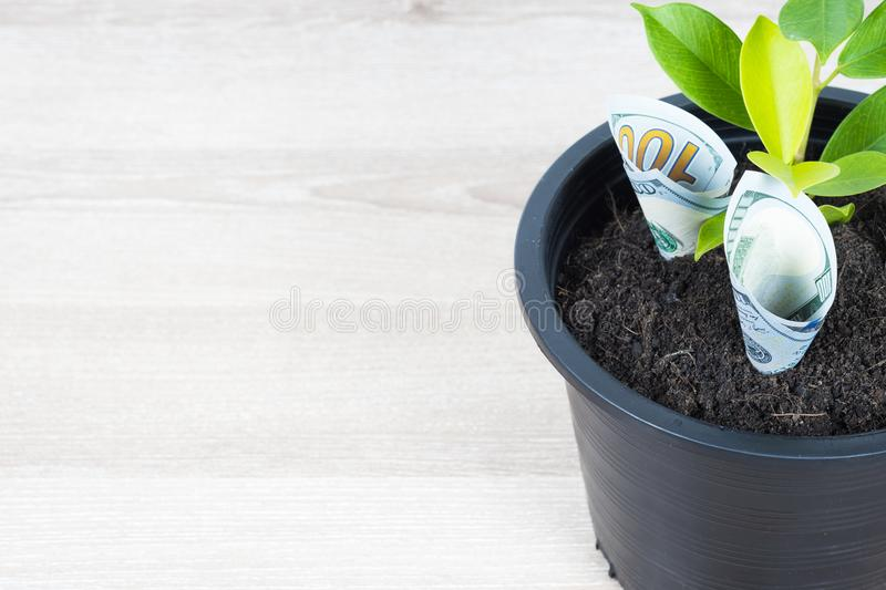 Planting US Dollars bills and tree in black flower pot placed on royalty free stock images