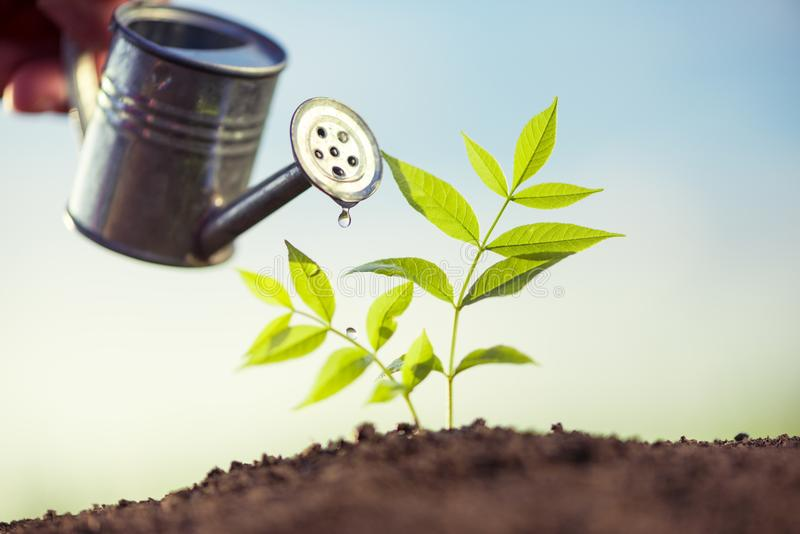 Planting and watering seedlings. Image royalty free stock photo