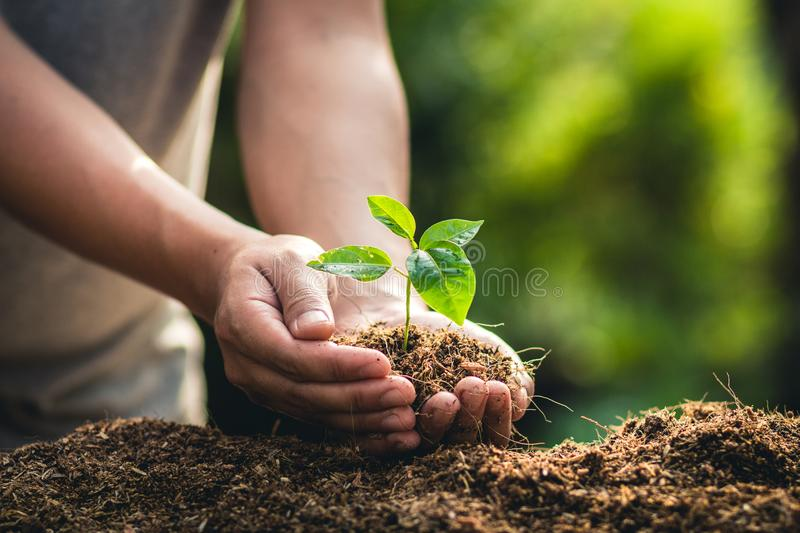 Planting trees growth passion fruit and hand Watering in nature Light and background stock photo