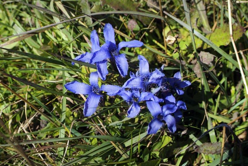 Plantkunde, Bloemen royalty-vrije stock foto's