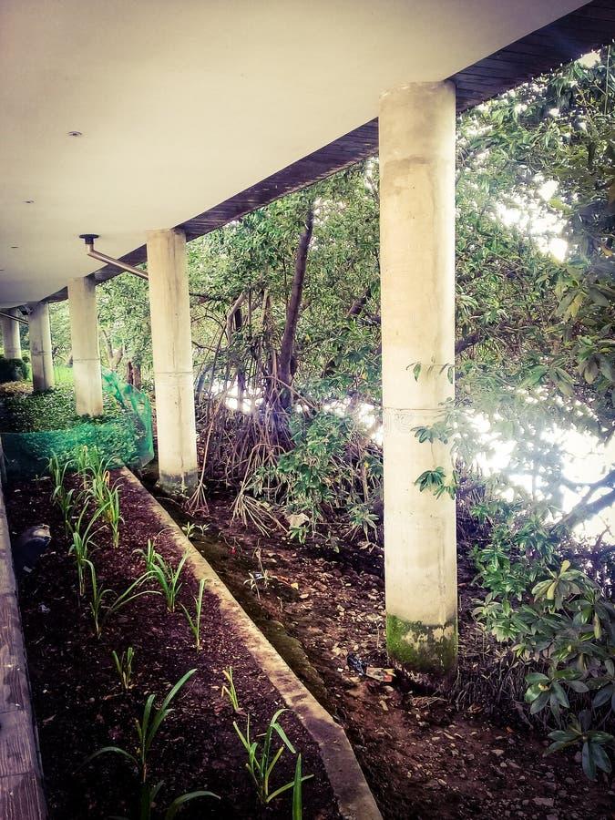 Plantland arkivfoto