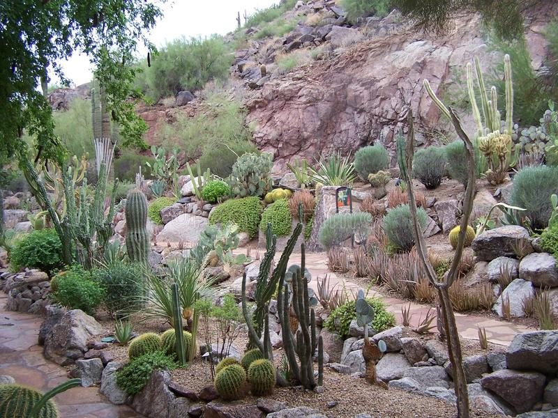 Plantlife в Scottsdale стоковая фотография