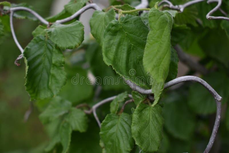 Plantlife royalty free stock photo