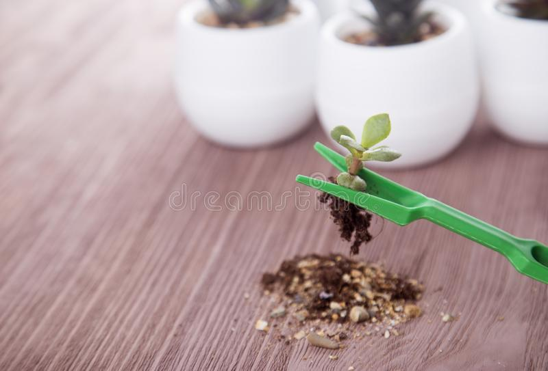 Plantor av suckulenter på en träbakgrund arkivfoton