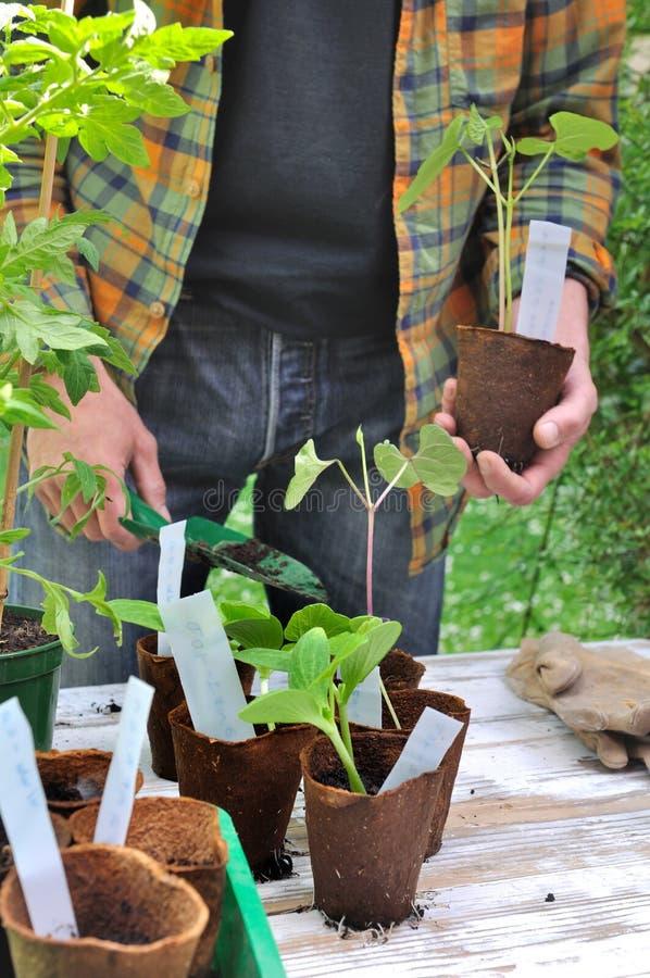 Plantor i växande kruka royaltyfri bild