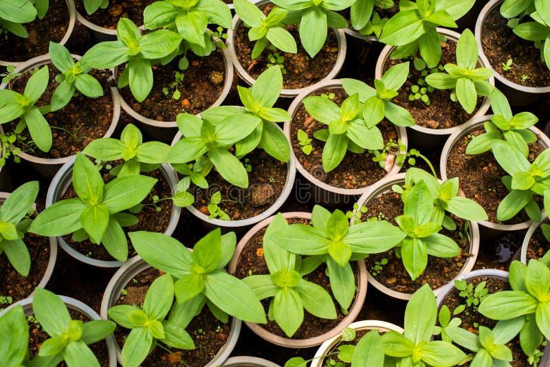 Plantor i växthuset royaltyfria foton