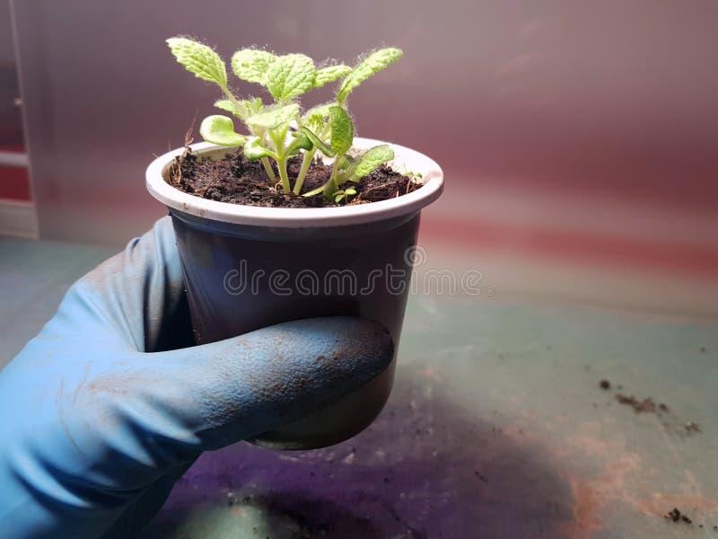 Plantor - mycket h?rliga visa plantor i en kruka i en behandskad hand arkivfoto