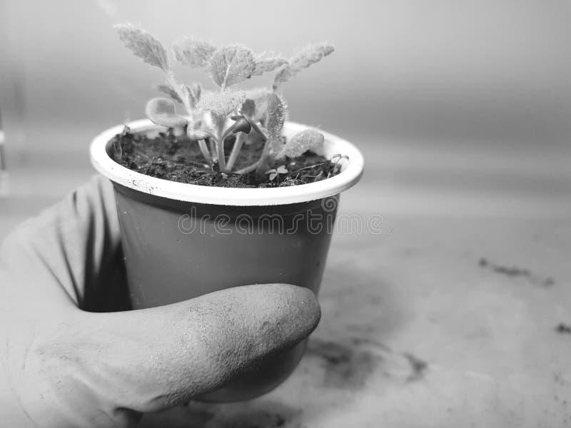 Plantor - mycket h?rliga visa plantor i en kruka i en behandskad hand fotografering för bildbyråer