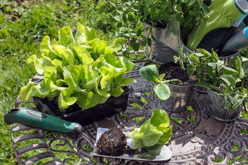 Plantor och trädgårds- hjälpmedel arkivfoton