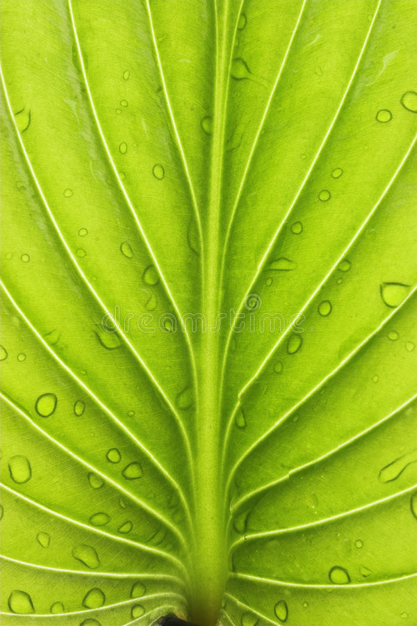 Plants royalty free stock photos