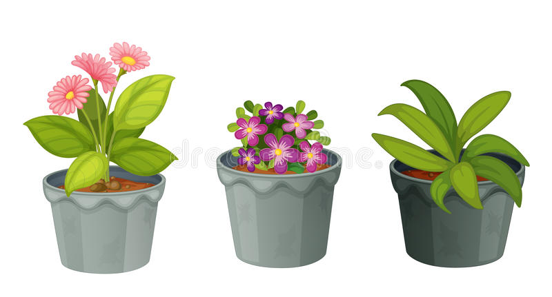 Plants royalty free illustration