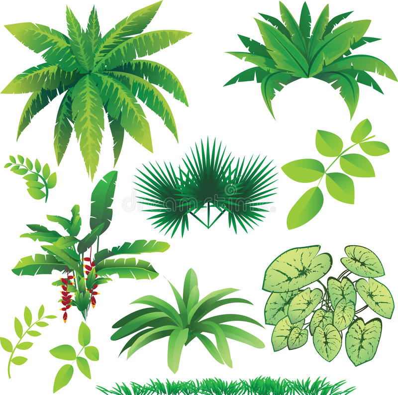 Plants. Vector illustration of many plants, great collection for nature design vector illustration