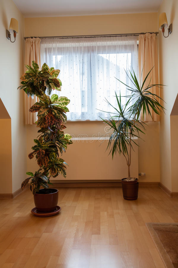 Download Plants stock image. Image of empty, apartment, gorgeous - 28023269